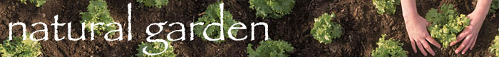 organic garden seed suppliers